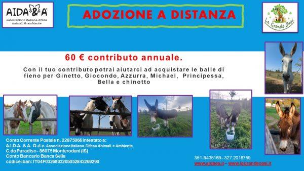 locandina adozione a distanza cavalli